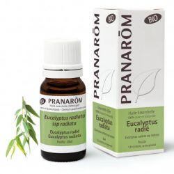 Limpa as vias respiratórias e fortalece o sistema imunitário. Óleo essencial 100% puro e biológico