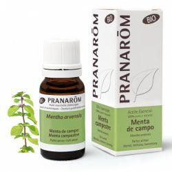 Dores de cabeça, enxaquecas, cólicas intestinais, náuseas, febre, tosse seca e congestão nasal. Óleo essencial 100% puro e biológico