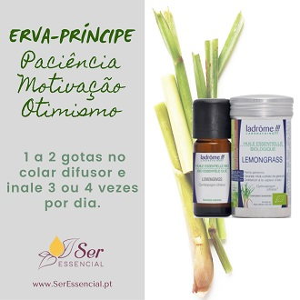 Óleo Lemongrass Capim-limão Erva-Príncipe