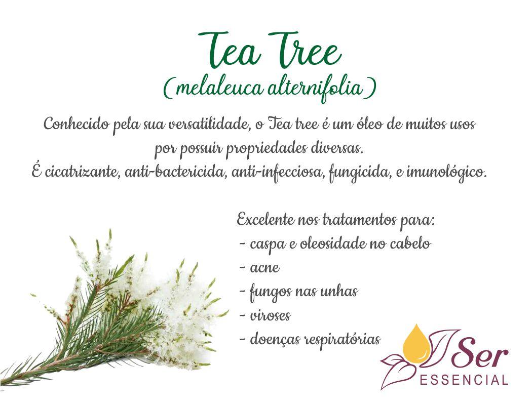 Tea tree (melaleuca alternifólia) no kit básico da aromaterapia!